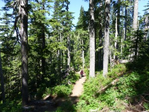 Heliotrope Ridge trail