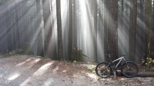 Light on Fromme