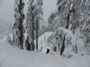 Seymour backcountry